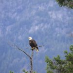 Vancouver Island is the best holiday with Wildlife