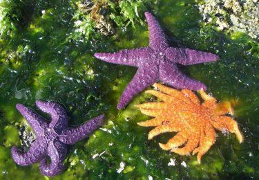 Stars - Copeland Marine Park_5366068664_l