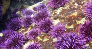 Nanaimo Yacht Charter  Best Sea Creatures