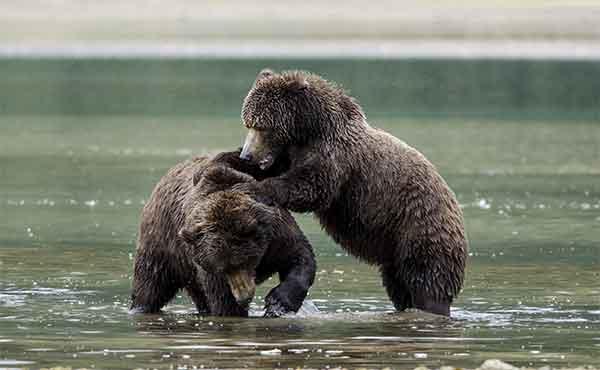 Wildlife in Desolation Sound British Columbia Canada